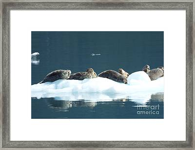 Seal Reflections Framed Print