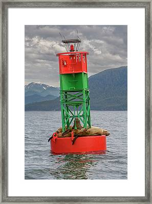 Seals Resting On Buoy Framed Print by Tom Norring