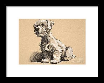 Puppy Framed Prints