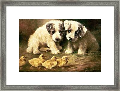 Sealyham Puppies And Ducklings Framed Print by Lilian Cheviot
