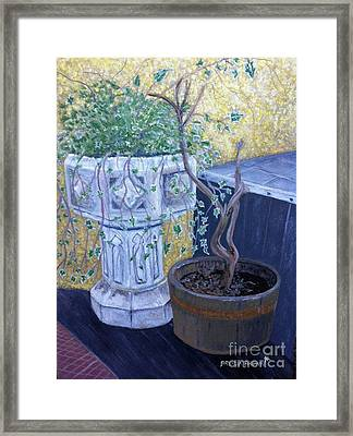 Sean's Planter Framed Print by Brenda Brown