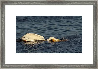 Search For Food Framed Print