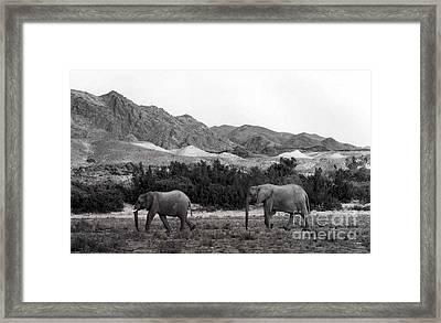 Searching Framed Print by Susan Chandler