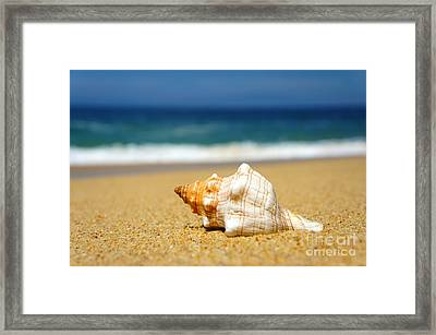 Seashell Framed Print by Aged Pixel