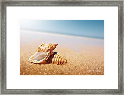 Seashell And Conch Framed Print