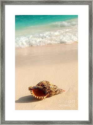 Seashell And Ocean Wave Framed Print