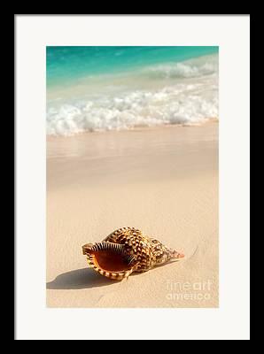 Sandy Shore Framed Prints