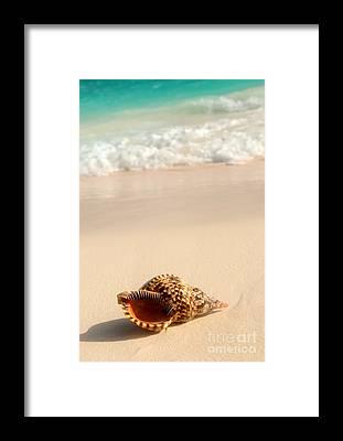 Island Life Framed Prints