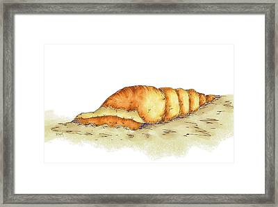 Seashell Framed Print by Brenda Bryant