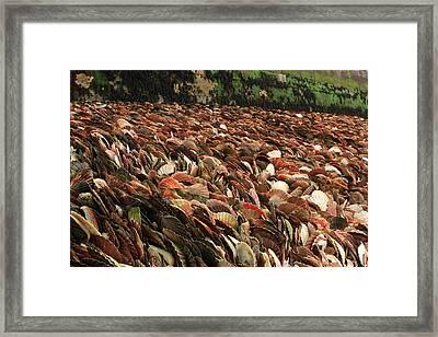 Seashell Coast Framed Print by Aidan Moran