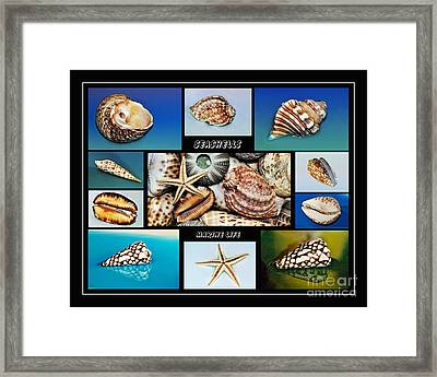 Seashell Collection 2 Framed Print by Kaye Menner