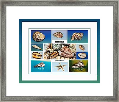 Seashell Collection 4 - Collage Framed Print by Kaye Menner