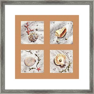 Seashell Collection II Framed Print by Irina Sztukowski