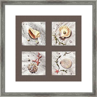 Seashell Collection IIi Framed Print by Irina Sztukowski