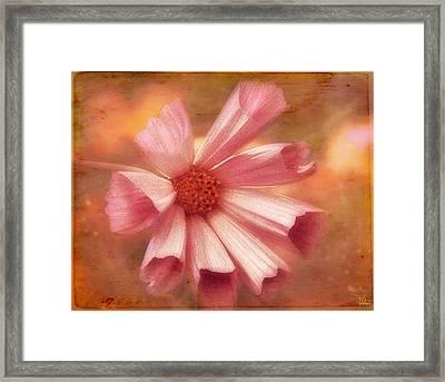 Seashell Cosmos Framed Print by Douglas MooreZart