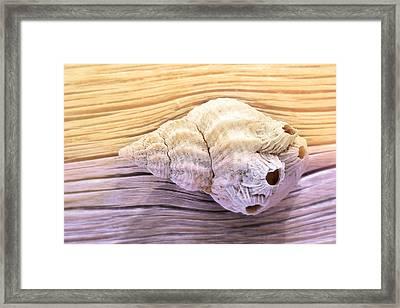 Seashell Glow Framed Print