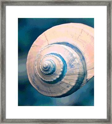 Seashell In Pastel Framed Print