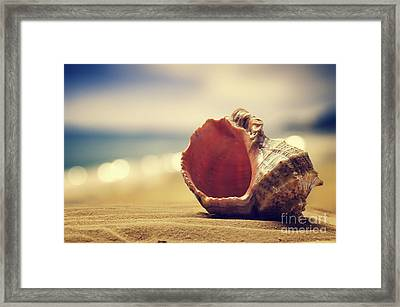 Seashell In The Sand  Framed Print by Jelena Jovanovic