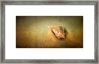 Seashell Framed Print by Joye Ardyn Durham