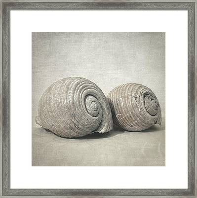 Seashell No.3 Framed Print