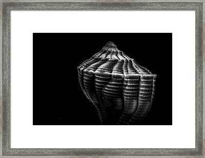 Seashell On Black Framed Print by Bob Orsillo