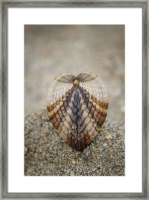 Seashell On Brown Beach Sand Background Framed Print