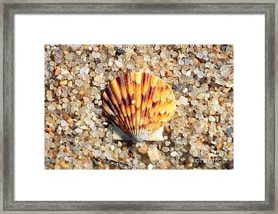 Seashell On Sandy Beach Framed Print