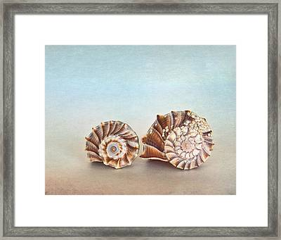 Seashell Patterns Framed Print