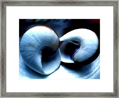 Seashell Rest Framed Print
