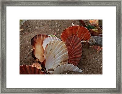 Seashell Sail Framed Print by Aidan Moran