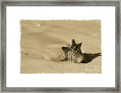 Seashell Framed Print by Sophie Vigneault