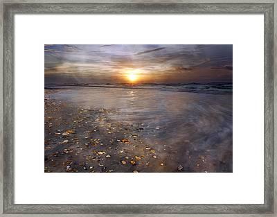 Seashell Sunrise Framed Print by Betsy Knapp
