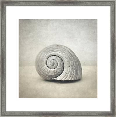 Seashell Framed Print