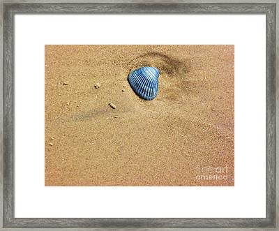 Seashell Framed Print by Venus