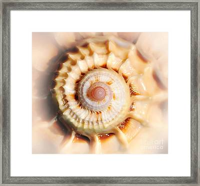 Seashell Wall Art 11 - Spiral Of Harpa Ventricosa Framed Print