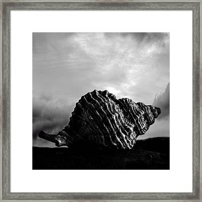 Seashell Without The Sea 2 Framed Print by Bob Orsillo