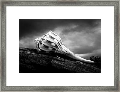 Seashell Without The Sea Framed Print by Bob Orsillo