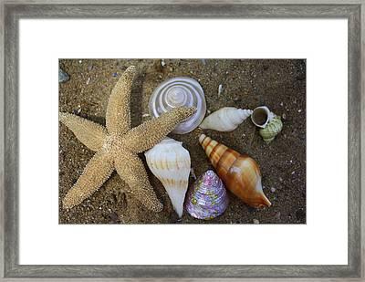 Seashells And Star Fish Framed Print