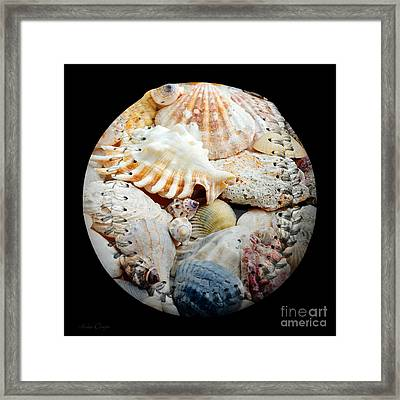 Seashells Baseball Square Framed Print by Andee Design