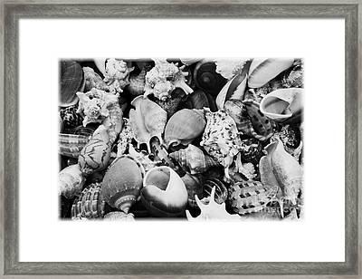 Seashells - Black And White Framed Print by Carol Groenen