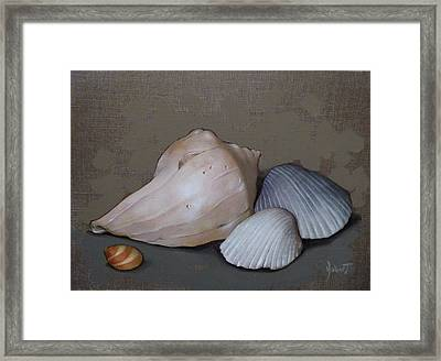 Seashells Framed Print by Clinton Hobart