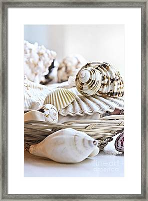 Seashells Framed Print by Elena Elisseeva