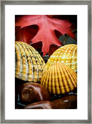 Seashells II Framed Print by Marco Oliveira