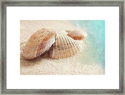 Seashells In The Wet Sand Framed Print by Sandra Cunningham
