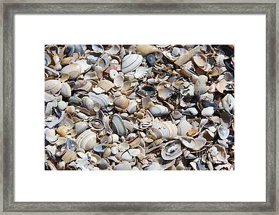 Seashells On The Beach Framed Print