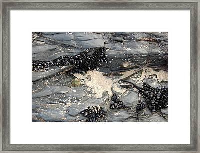 Seashells On The Seashore Framed Print by Elijah  Montecelli