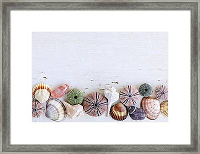Seashells On Wood Background Framed Print by Elena Elisseeva