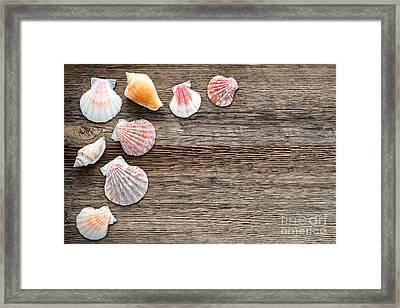 Seashells On Wood Framed Print by Olivier Le Queinec