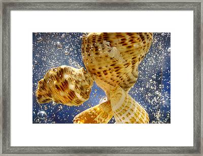 Framed Print featuring the photograph Seashells by Paula Brown