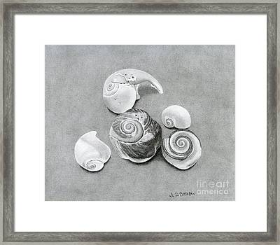 Seashells Framed Print by Sarah Batalka